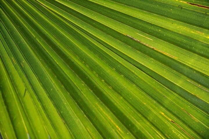 palm-366843_960_720